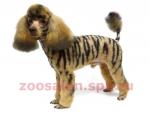 Пудель-тигр